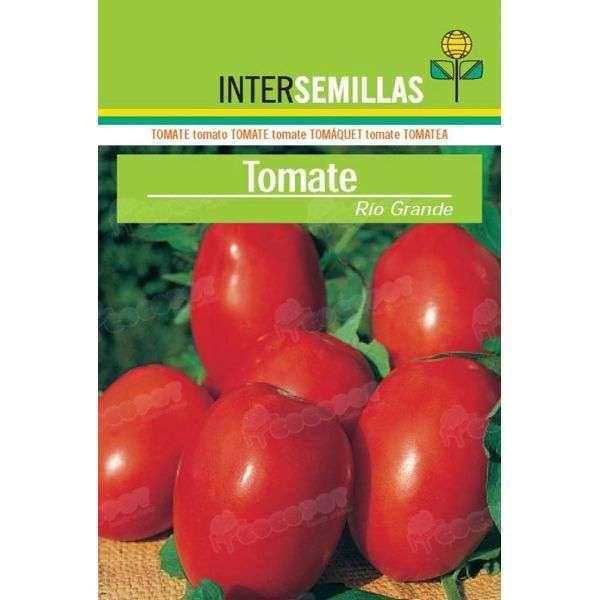 Gladiolo naranja 10 ud al mejor precio en cocopot huerto for Jardin vertical de fieltro en formato kit
