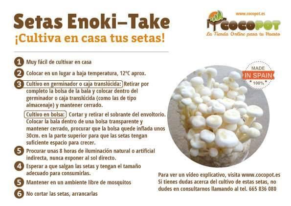 cultivar enoki take