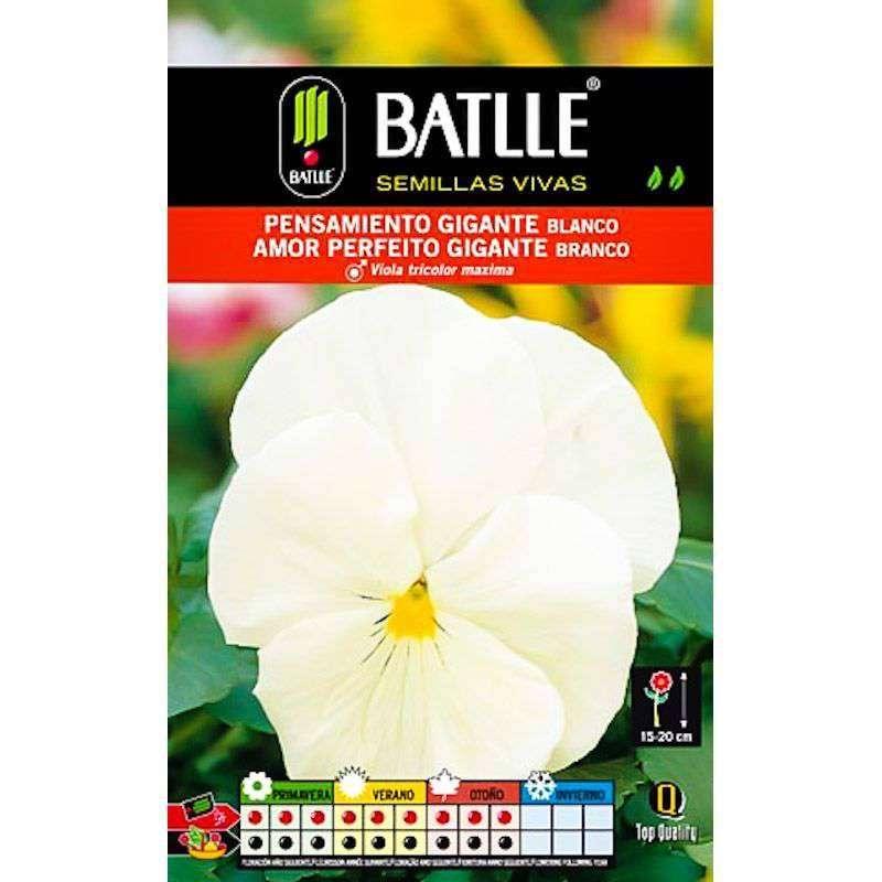 Pensamiento gigante blanco al mejor precio en cocopot for Jardin vertical de fieltro en formato kit
