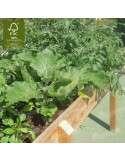 Mesa Huerto Urbano 160x80cm - Detalle cultivo