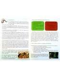 Kit Vermicompostaje Verde