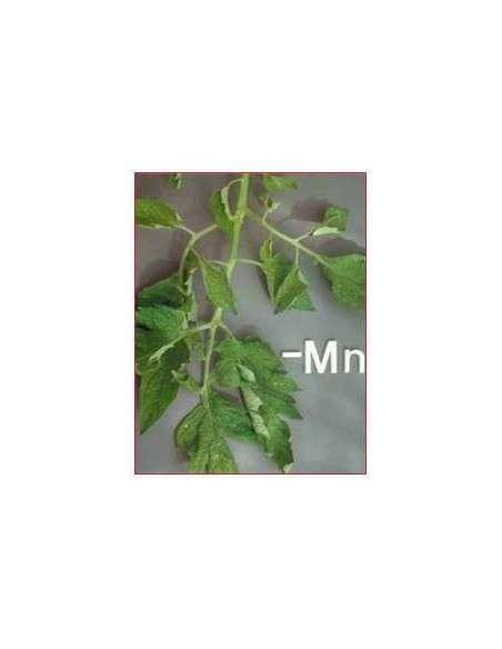Corrector Magnesio ECO 50ml. COCOPOT - 4