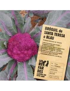 Semillas Ecológicas Bróculi de Santa Teresa o Azul Brócoli LES REFARDES - 1