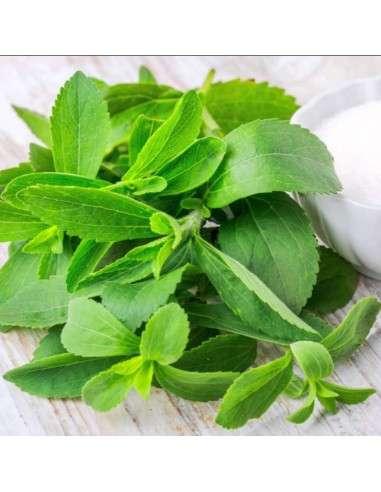 500 Semillas de Stevia INTERSEMILLAS - 1