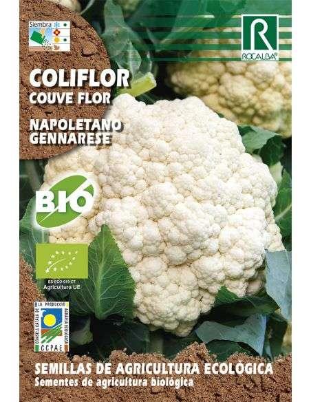 Semillas Ecológicas de Coliflor Napoletano Gennarese Rocalba - 1