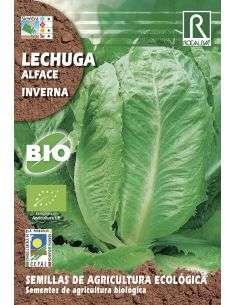 Semillas Ecológicas de Lechuga Inverna Rocalba - 1