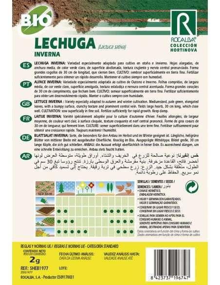 Semillas Ecológicas de Lechuga Inverna Rocalba - 2