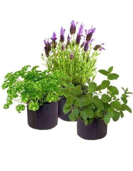 Kit Autocultivo Plantas Aromáticas en Maceta COCOPOT - 3