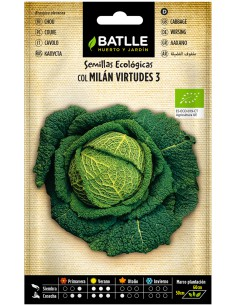 Semillas de Col Milán Virtudes 3 Ecológicas