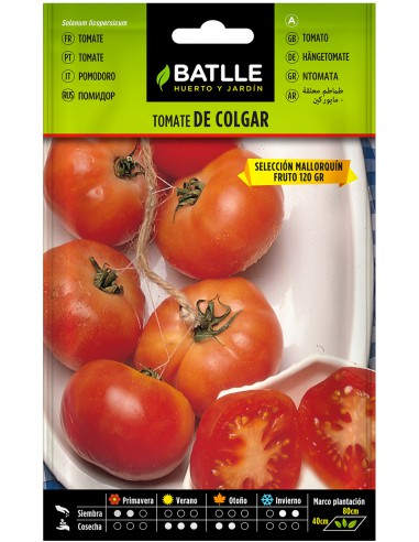 Semillas Tomate de Colgar Mallorquín