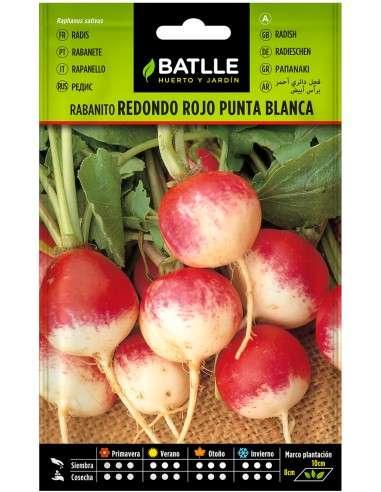 Semillas de Rabanito Redondo Rojo punta Blanca
