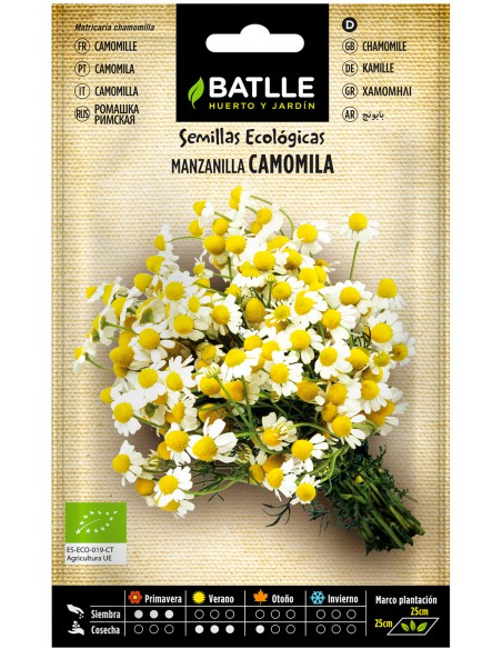 Semillas de Manzanilla Camomila Ecológicas