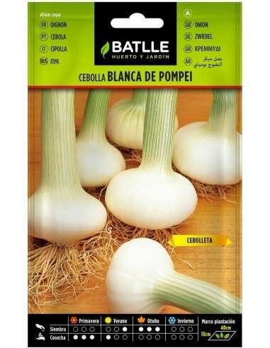 Semillas de Cebolla Blanca Pompei 4gr.