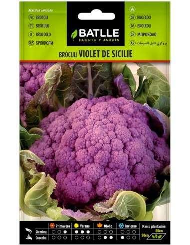 Semillas de Bróculi Violet de Silice 4g. Brócoli