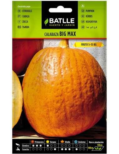 Semillas de Calabaza Gigante Big Max fruto 5-15kg.