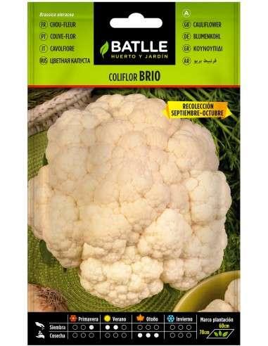 Semillas de Coliflor Brio Sel. Urgelba Sept - Oct