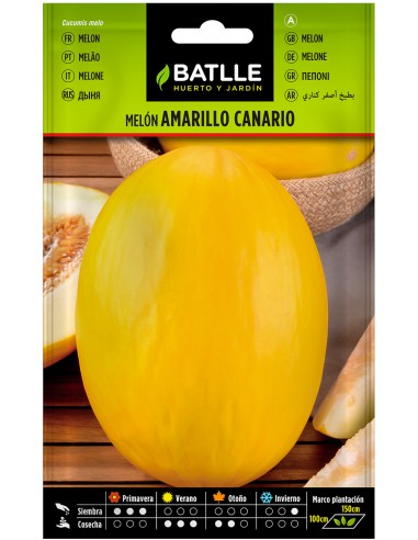 Semillas de Melón Amarillo Canario 2