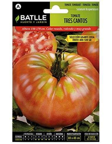 Semillas Tomate Tres Cantos Gigante Rosa