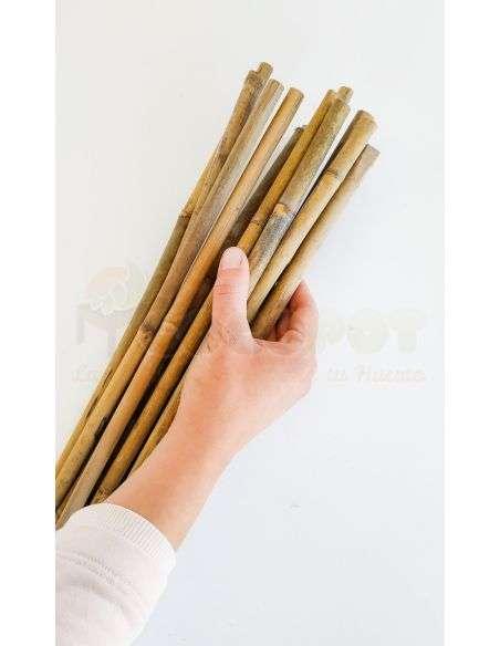 Tutor de bambú 1,5m. Calibre 12/14