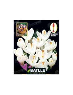Crocus Blanco 10 ud. Semillas Batlle - 1