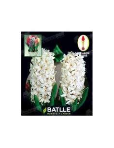 Jacinto Blanco 3 ud. Semillas Batlle - 1