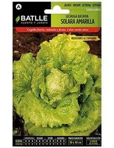 Semillas de Lechuga Batavia Solara Amarilla