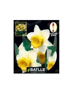 Narciso Trompeta Blanco-Amarillo 4 ud. Semillas Batlle - 1