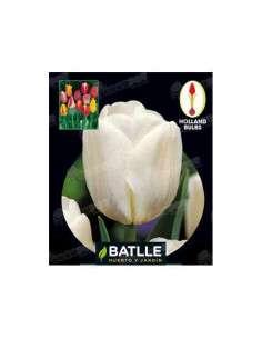 Tulipán Darwin Blanco 3 ud. Semillas Batlle - 1