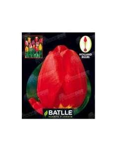 Tulipán Darwin Rojo 3 ud. Semillas Batlle - 1