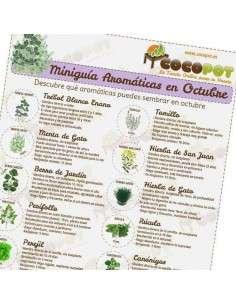 Lámina Aromáticas en Octubre COCOPOT - 48