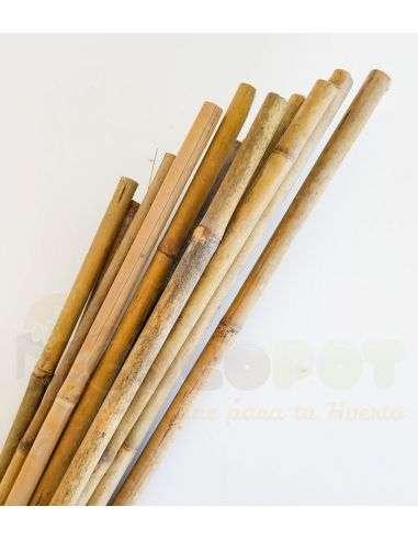 25u. Tutor de bambú 150cm. Calibre 14/16