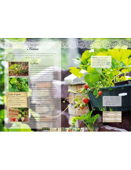 Cultiva un Huerto en Casa
