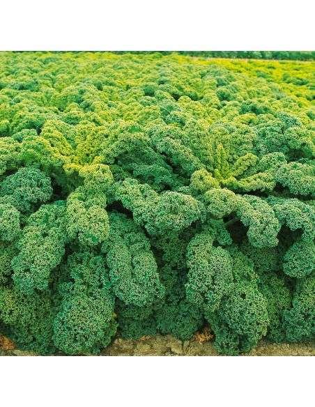 6u. Plantel Ecológico Col Kale