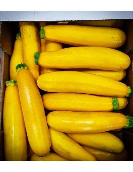 Semillas Ecológicas Calabacín amarillo 2g.