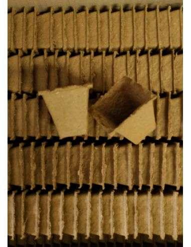 Macetas Ecológicas 6x6x6cm. Cuadradas Biodegradables