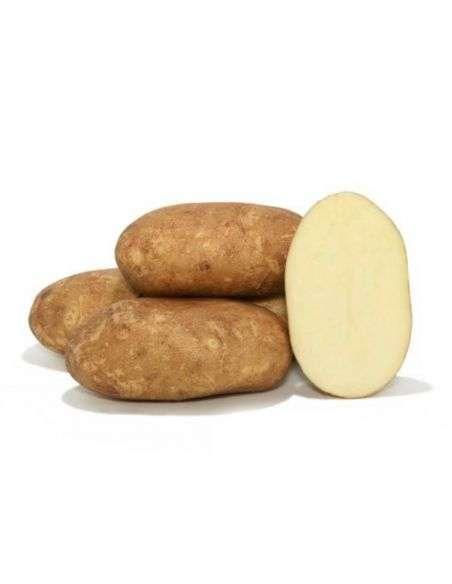 Patata de Siembra Pregerminada KENNEBEC 3Kg. (100 patatas)