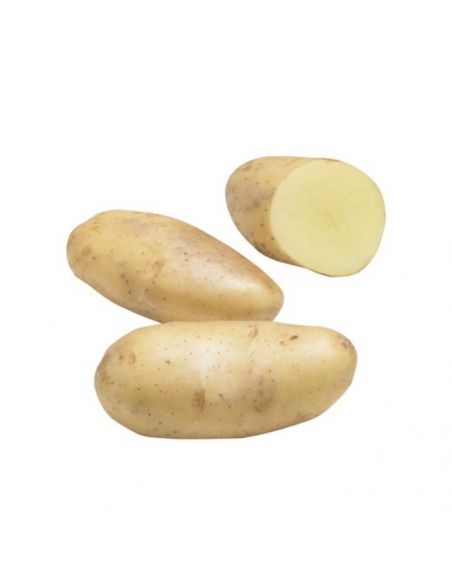 Patata de Siembra Pregerminada SPUNTA 3Kg. (100 patatas)
