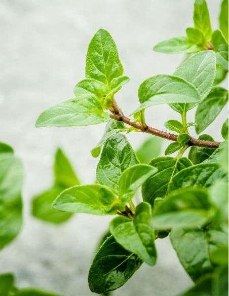 3u. Plantel Ecológico Orégano
