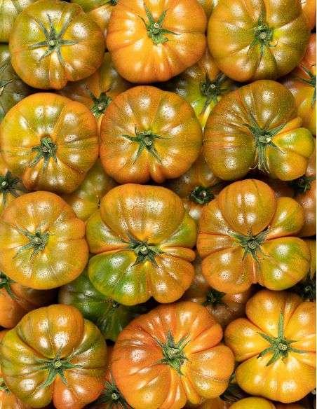 3u. Plantel Ecológico Tomate Marmande Raf