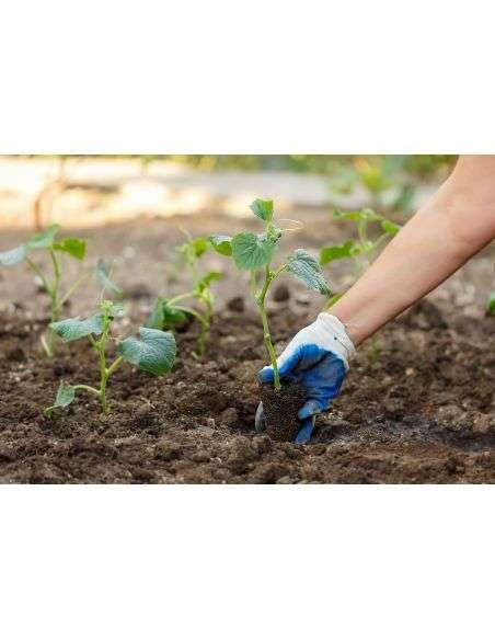 3u. Plantel Ecológico Pepino