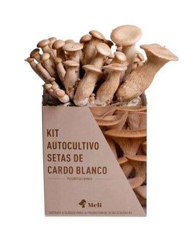Kit Autocultivo Setas de Cardo Blanco