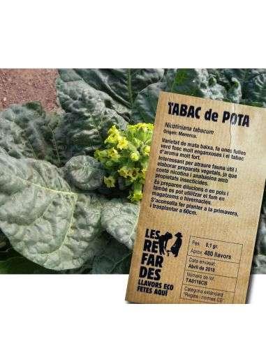 Semillas Ecológicas Tabaco de Pota