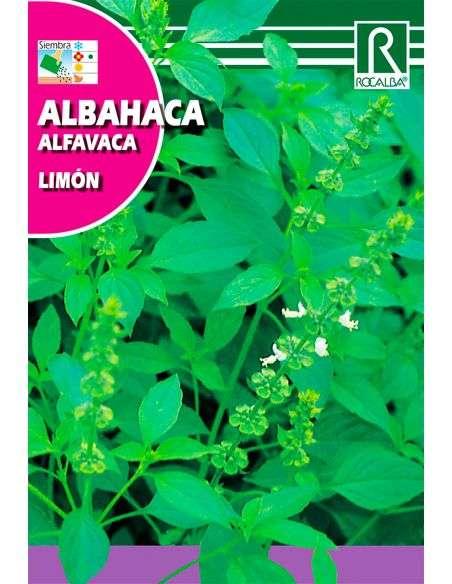 Semillas de Albahaca Limón