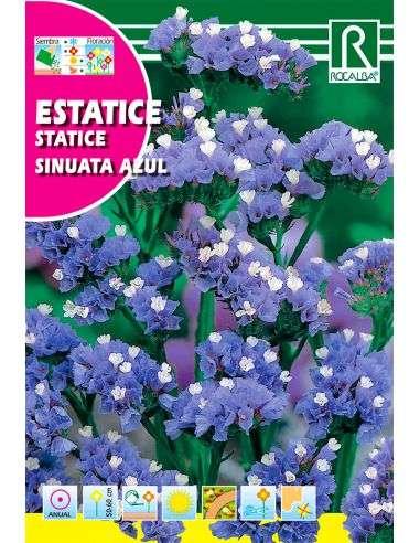 Semillas de Statice Sinuata Azul