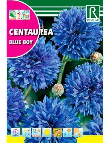 Semillas de Centaurea Blue Boy Azul