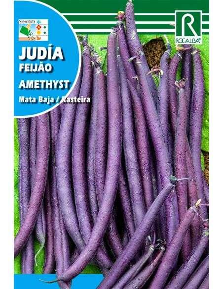 Semillas de Judía Enana Violeta Amethyst 25g.