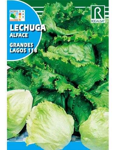 Semillas de Lechuga Iceberg Grandes Lagos
