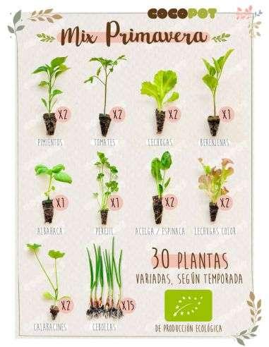 "Plantel Ecológico ""Mix Primavera"" 30 Plantas variadas"