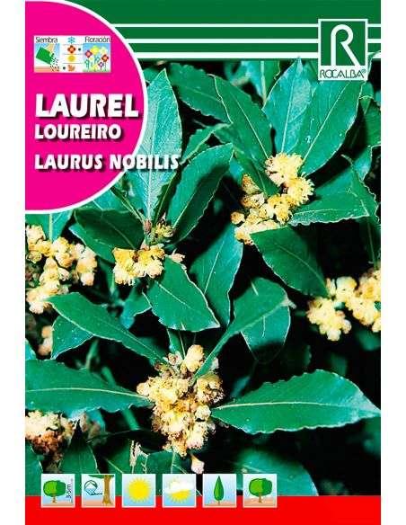 "Semillas de Laurel ""Laurus Nobilis"""