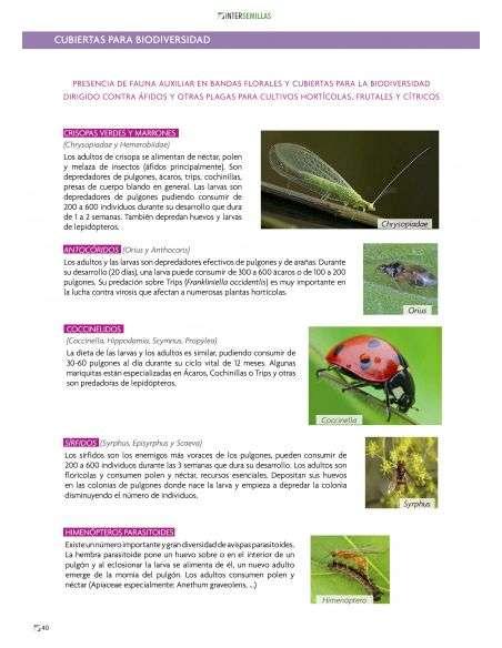 Semillas Mix de Flores Atrayentes de insectos auxiliares 15g.